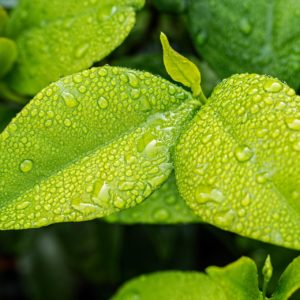 ヒキオコシ葉/茎エキスは頭皮環境を整えて育毛にもプラスに働く